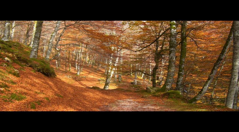 Ces GR® qui font découvrir les plus belles forêts de France