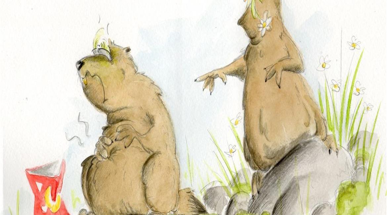 Pas de chocolat pour les marmottes !
